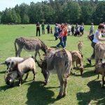Kierunek Ruciane Nida: Park Dzikich Zwierząt