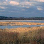 Rezerwat Jezioro Łuknajno